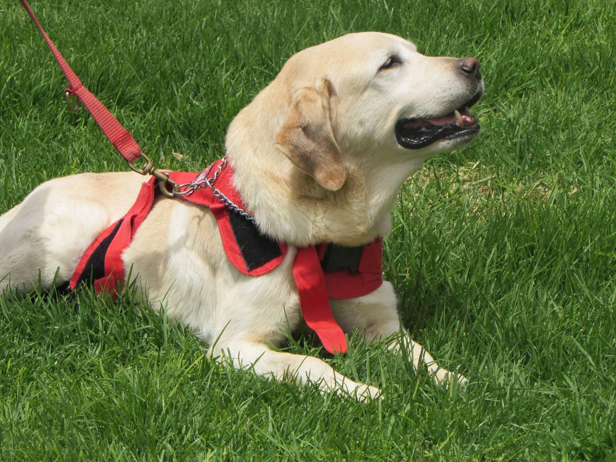 エクアドル、熊本大地震救助犬、ダイゴ。俺の合鍵