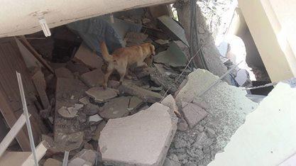 エクアドル、熊本大地震救助犬、ダイゴ