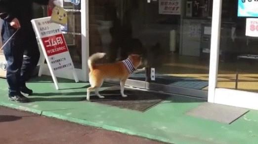 熊本県の鍵屋さんには犬専用の自動ドア開錠ボタンがあって驚きです。しかも犬がちゃんと使っている。俺の合鍵。