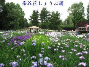 埼玉県さいたま市見沼区の染谷花しょうぶ園の写真です。見沼区の対面式店舗で合鍵作成できます。合鍵作成・合鍵制作・スペアキー作成・金額・定価・価格・値段も店舗と変わらず、全国配送料無料の俺の合鍵は自宅へ合鍵宅配します。