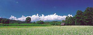 長野県木曽郡木曽町で、合鍵作りたい・ディンプルキー作成したい・純正キー作りたい場合には、【俺の合鍵】でも合鍵ネット注文できます。