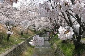 京都府京田辺市やその周辺の市区町村で合鍵を作りたい場合にはインタネット注文の俺の合鍵が便利です。