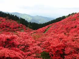 奈良県御所市や、この周辺で合鍵を失くしたり、合鍵を作りたい場合には俺の合鍵ネット注文がお得で便利です。